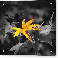 Illuminated Leaf Acrylic Print