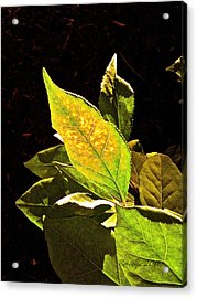Illumined Acrylic Print by Rotaunja
