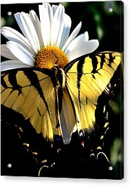 Acrylic Print featuring the photograph I'm A Beauty Fly by Tanya Tanski