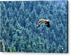 Im Outta Here Baby Acrylic Print by Don Mann