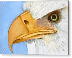 Image 1147b Bold Eagle 1 Acrylic Print by Wilma Manhardt