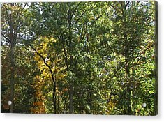 Acrylic Print featuring the photograph Image Of Fall by Pamela Hyde Wilson