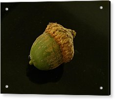 Immature Acorn Acrylic Print by Rory Cubel