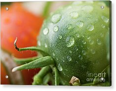 Immature Tomatoes Acrylic Print by Sami Sarkis