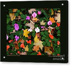Impatiens And Autumn Leaves Acrylic Print