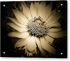 Imperfection Acrylic Print by Beth Akerman