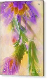 Impression Of Asters Acrylic Print by Judi Bagwell