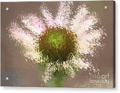 Impressionistic Echinacea Acrylic Print by Deborah Benoit