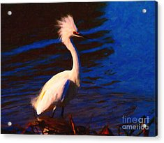 Impressions Of A Snowy Egret . Painterly Acrylic Print by Wingsdomain Art and Photography