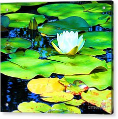 Impressions Of A White Water Lily Acrylic Print by J Jaiam