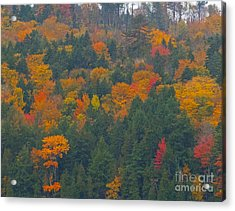 Imprssions Of Autumn Acrylic Print by Charles  Ridgway
