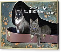 In A Cats Eyes Acrylic Print