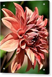 In Bloom Acrylic Print by Jyotsna Chandra