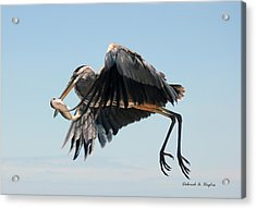 In Flight 3 Acrylic Print