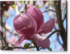 Acrylic Print featuring the photograph In Full Bloom Nb by Susan Alvaro