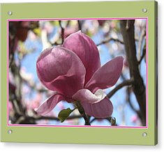 Acrylic Print featuring the photograph In Full Bloom by Susan Alvaro