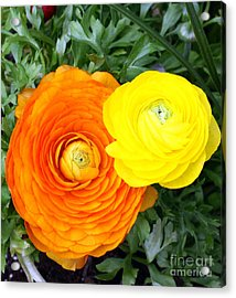 Acrylic Print featuring the photograph In Living Color by Denise Pohl