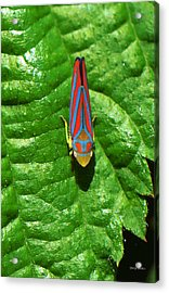 Acrylic Print featuring the photograph In My Yard 001 by George Bostian