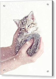 In Safe Hands  Acrylic Print by Amy Tyler