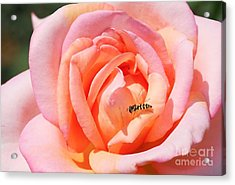 Acrylic Print featuring the photograph In Search Of Nectar by Fotosas Photography