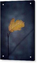 In Space Acrylic Print by Odd Jeppesen