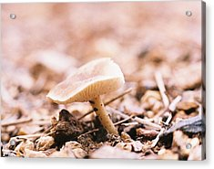 In The Begining Acrylic Print by