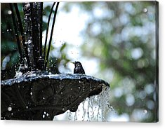 Acrylic Print featuring the photograph In The Cool Of The Morning #1 by Linda Cox