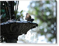 Acrylic Print featuring the photograph In The Cool Of The Morning #2 by Linda Cox