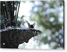 Acrylic Print featuring the photograph In The Cool Of The Morning #3 by Linda Cox