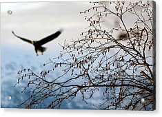 In The Distance Acrylic Print by Carrie OBrien Sibley