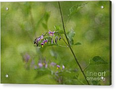 In The Garden Acrylic Print by Beve Brown-Clark Photography
