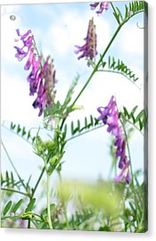 In The Grass Acrylic Print by Ioana Geacar