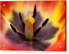 In The Heart Of Flower II Acrylic Print