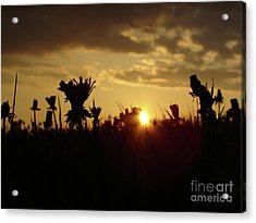 Acrylic Print featuring the photograph In The Middle Of Grass by Bruno Santoro