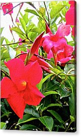 In The Pink Acrylic Print by Brian D Meredith