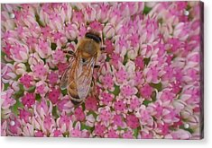 In The Pink Acrylic Print by Ronda Broatch