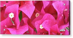 In The Pink Today Acrylic Print by Andrea  OConnell