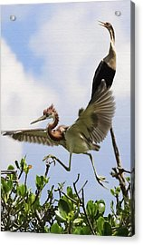 In The Rookery Acrylic Print by Patrick M Lynch