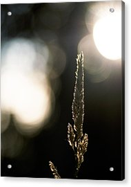 In The Spotlight Acrylic Print