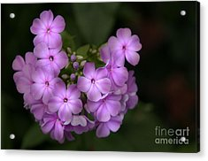 Acrylic Print featuring the photograph In The Spotlight by Tamera James