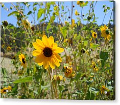 In The Sun Acrylic Print