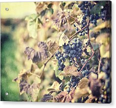 In The Vineyard Acrylic Print by Lisa Russo