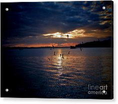 In To The Light Acrylic Print by Karen Lewis