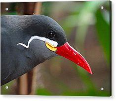 Acrylic Print featuring the photograph Inca Tern by Julia Wilcox