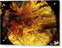 Indian Fall  Acrylic Print