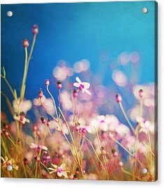 Infatuation In Blue  Acrylic Print by Amy Tyler