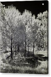 Infrared Trees Acrylic Print by Stavros Argyropoulos