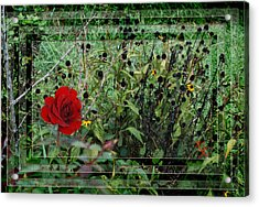 Inner Layers Acrylic Print by Kelly Rader