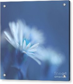 Innocence 11 Acrylic Print by Variance Collections