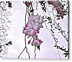 Innocence Acrylic Print by Rotaunja